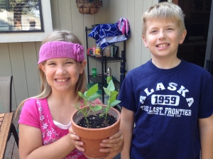 checking on the bean plants